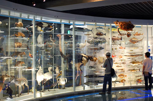 National Museum of Nature and Science: Ueno - Where In ...