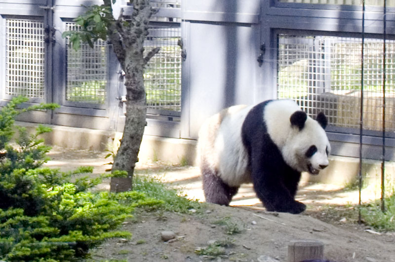 Ueno Zoo Ueno Where In Tokyo Listing